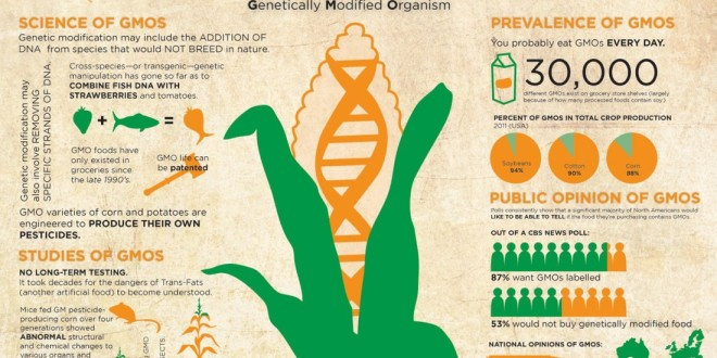 What are GMOs and Why They are Harmful